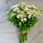 Daisy Brides Hand Tied