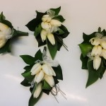 Ivory Tulip Corsages
