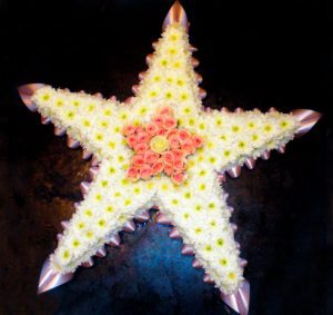 Star with five Points in White and Pink Flowers, Florist, Radcliffe, Funeral